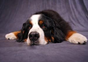 divorce qui garde le chien